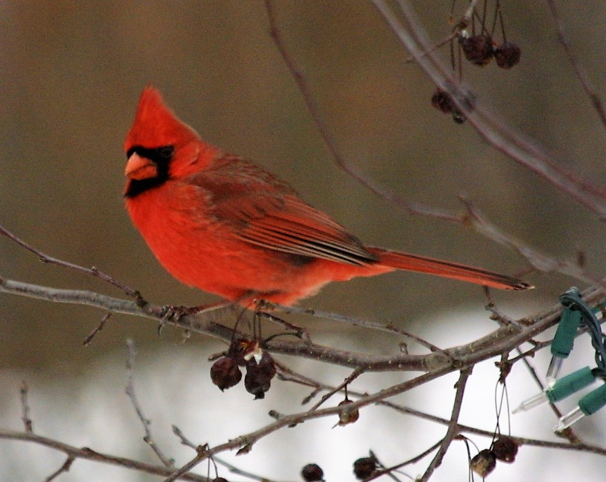 the 49 th annual jackson audubon christmas bird count was held this year on december 16 th cloudy conditions and a chilly wind greeted the thirty - Audubon Christmas Bird Count